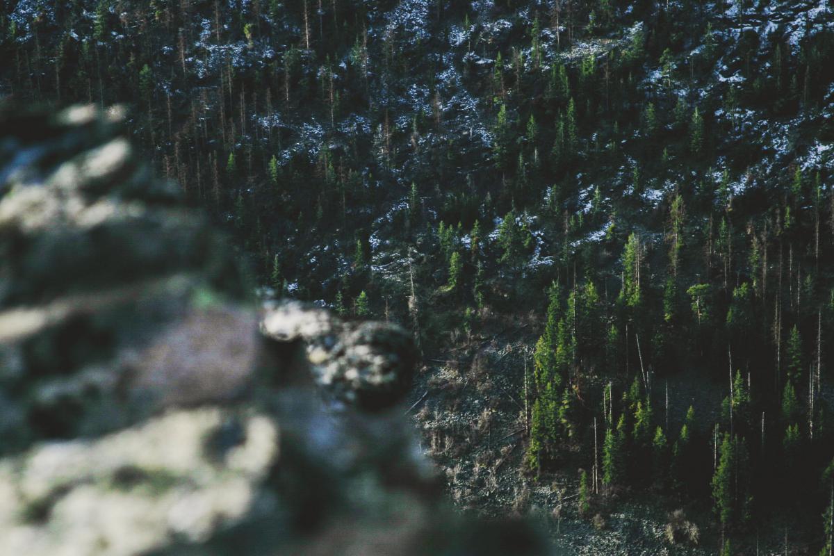 Web de araña forestal #10121