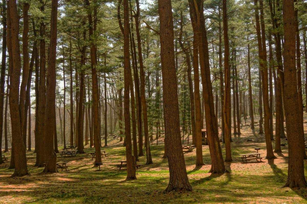 Forest Tree Landscape #101298