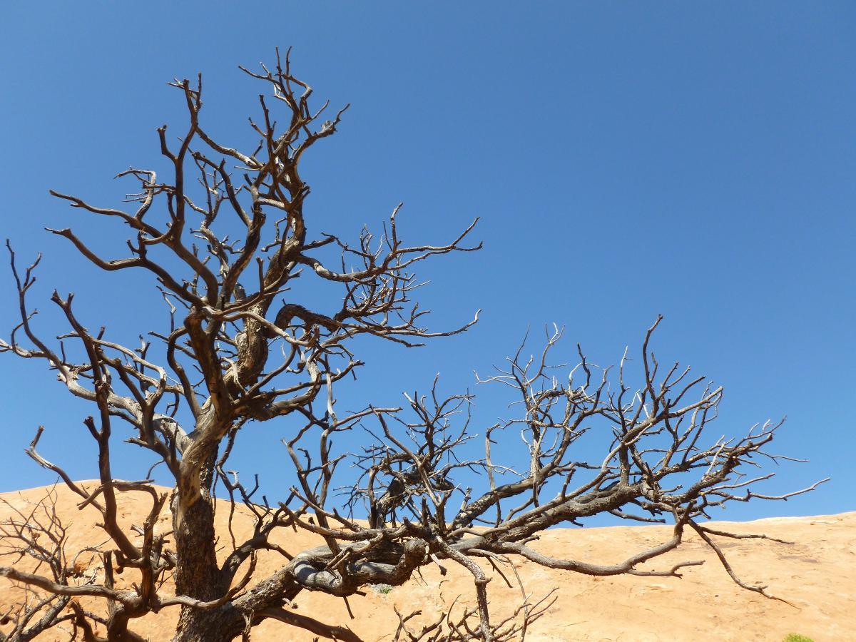 Plant Branch Tree #102223