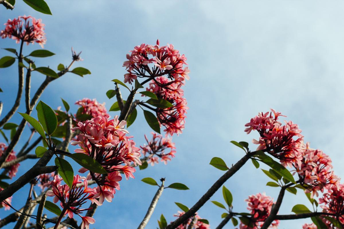 Flower Plant Leaf #10237