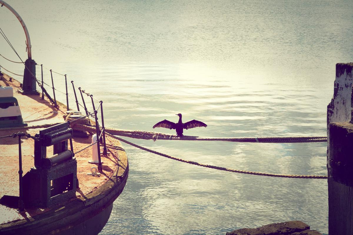 Boat Vessel Sea #10298