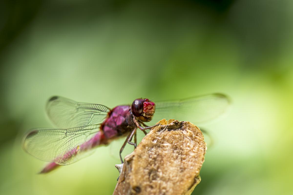 Insect Beetle Arthropod #10378