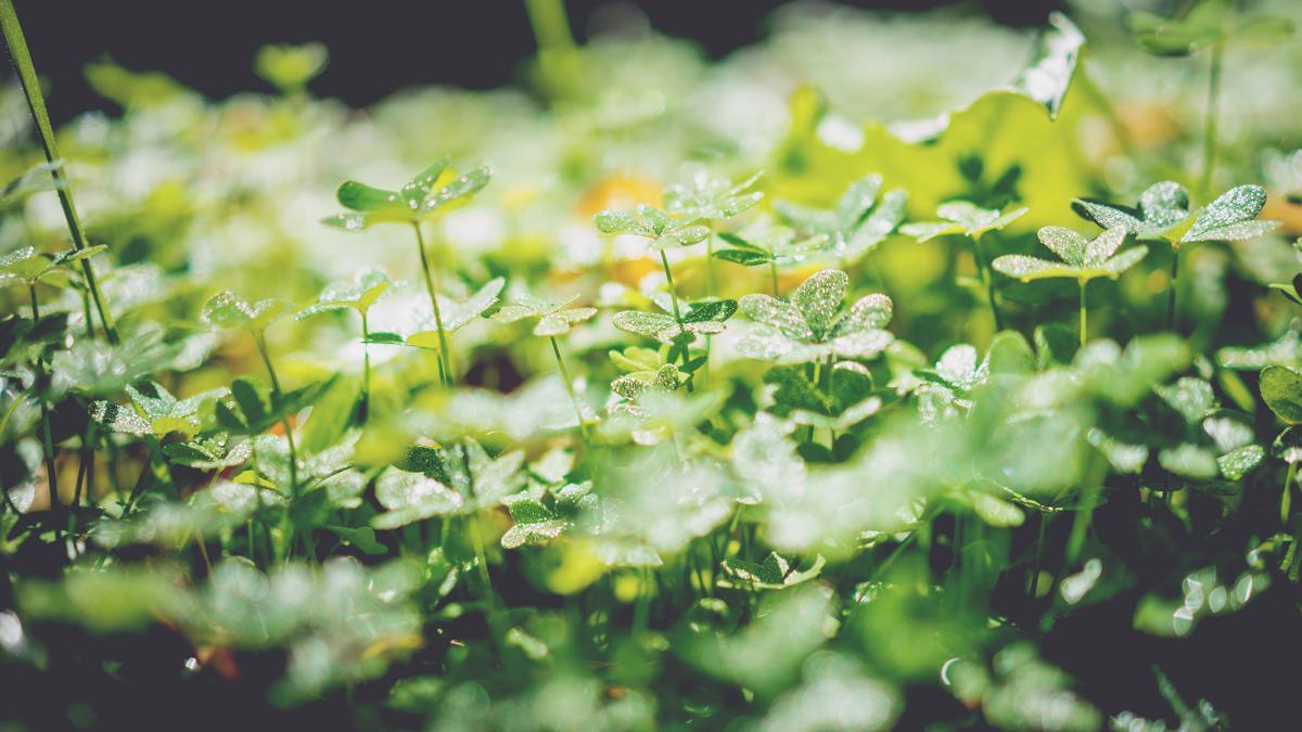 Plant Leaf Spring #10424