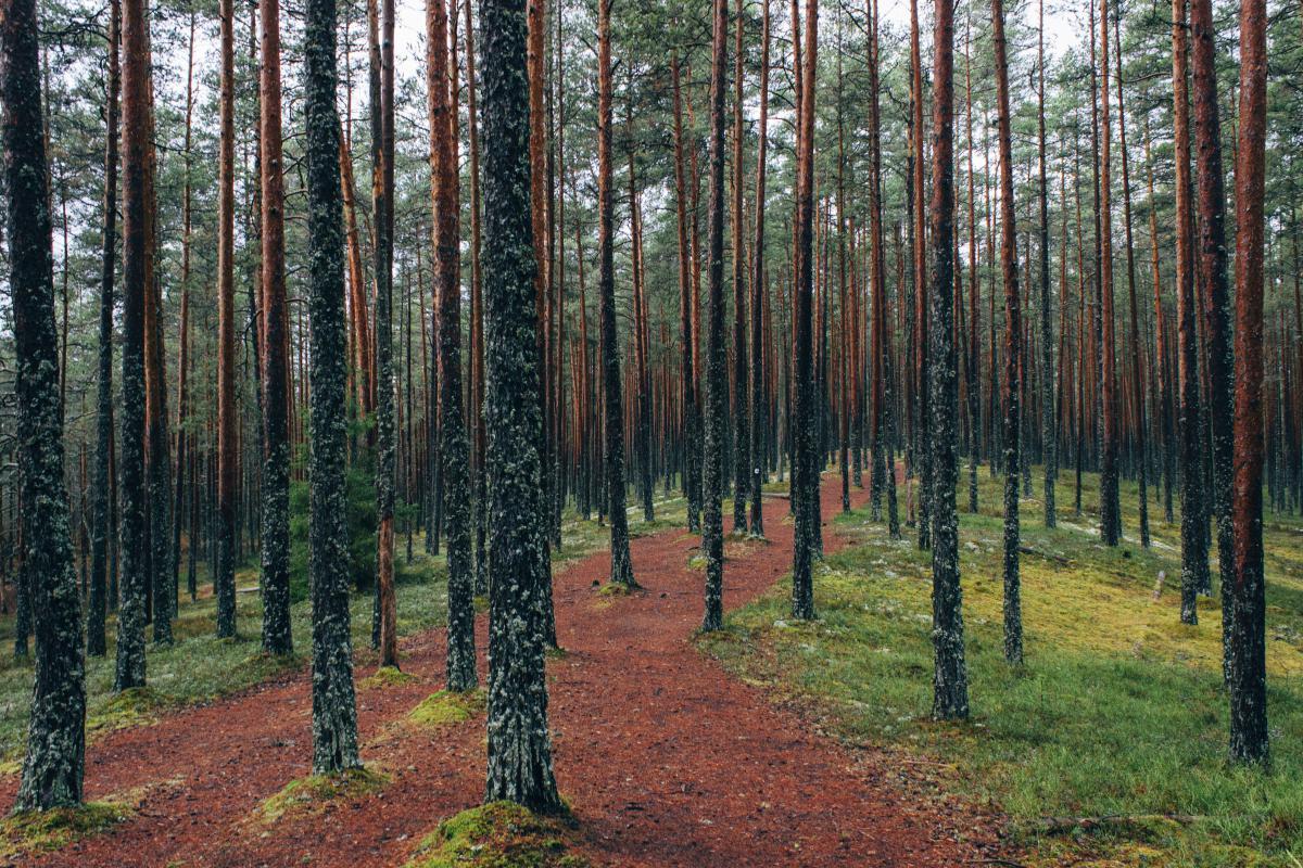 Tree Landscape Forest #10460
