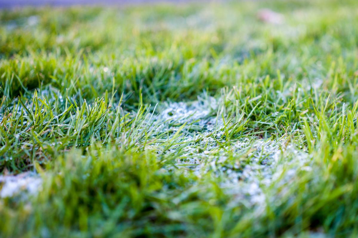 Grass Plant Summer #10514