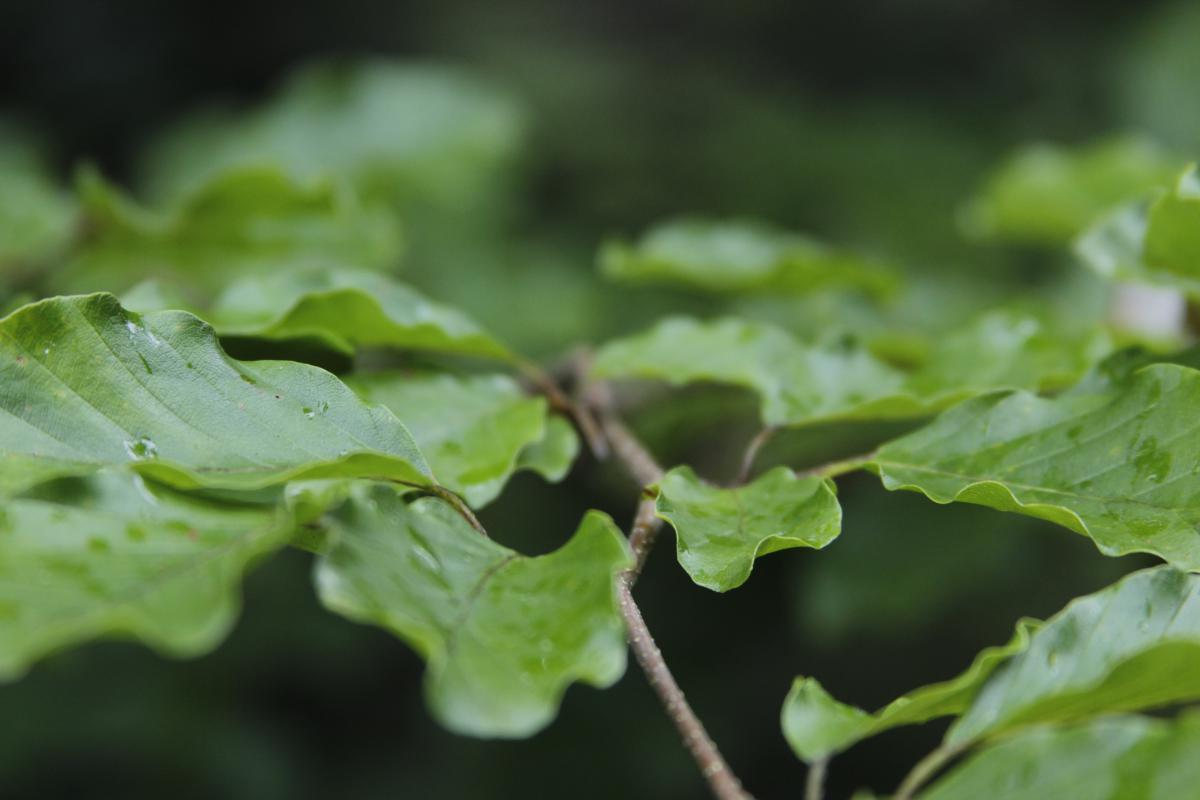 Plant Leaf Branch #10588