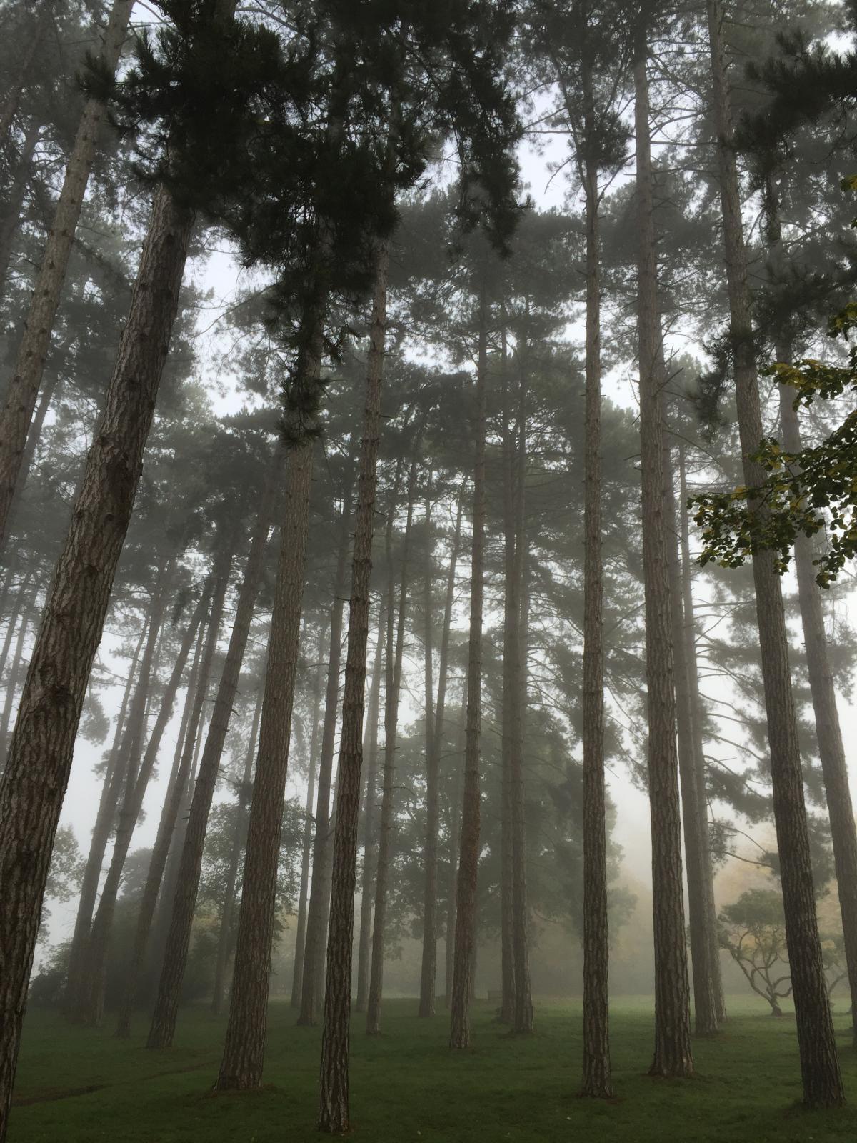 Tree Bamboo Plant #10591