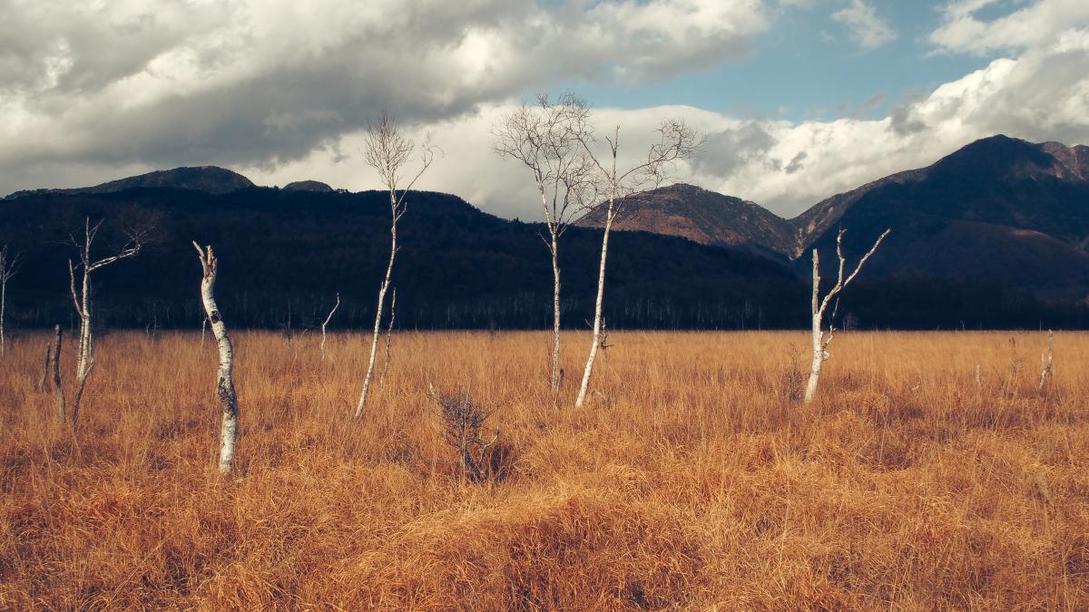 Field Land Landscape #10596