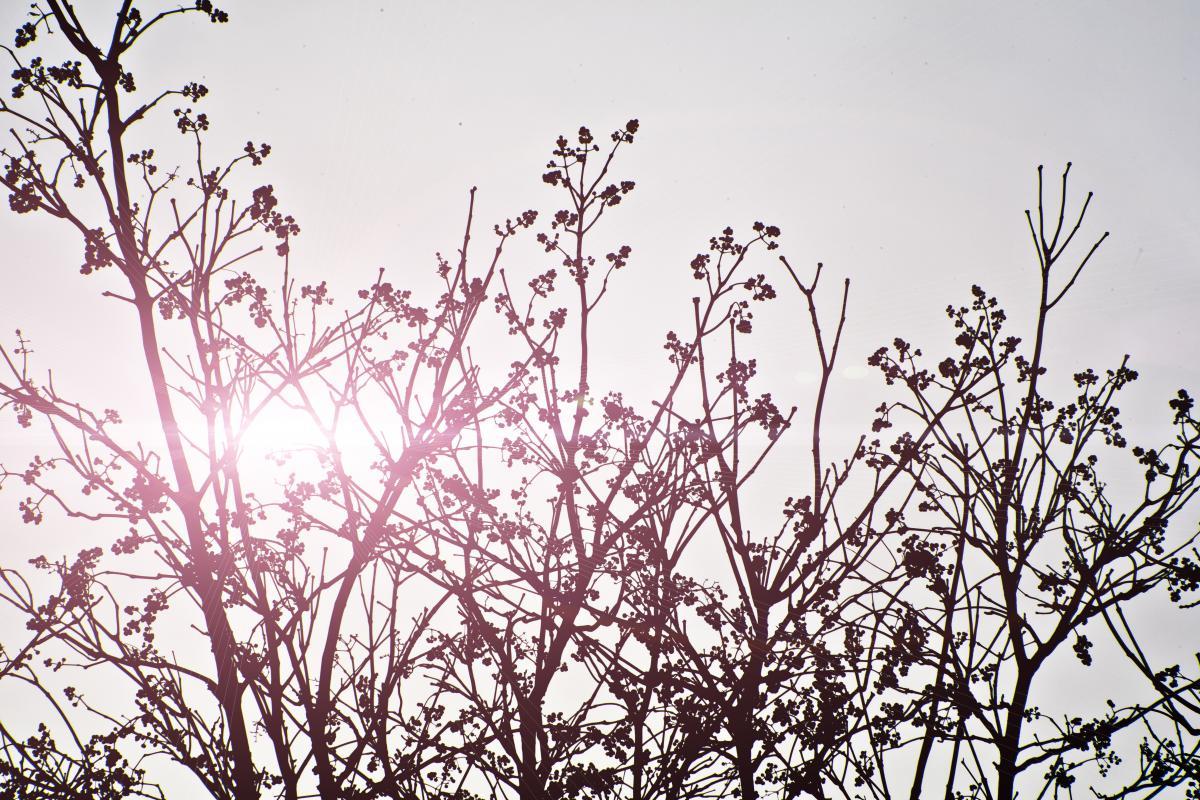 Plant Leaf Branchlet #10610