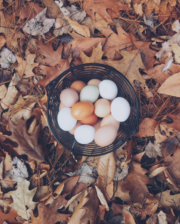 Egg Earthstar Fungus #10616