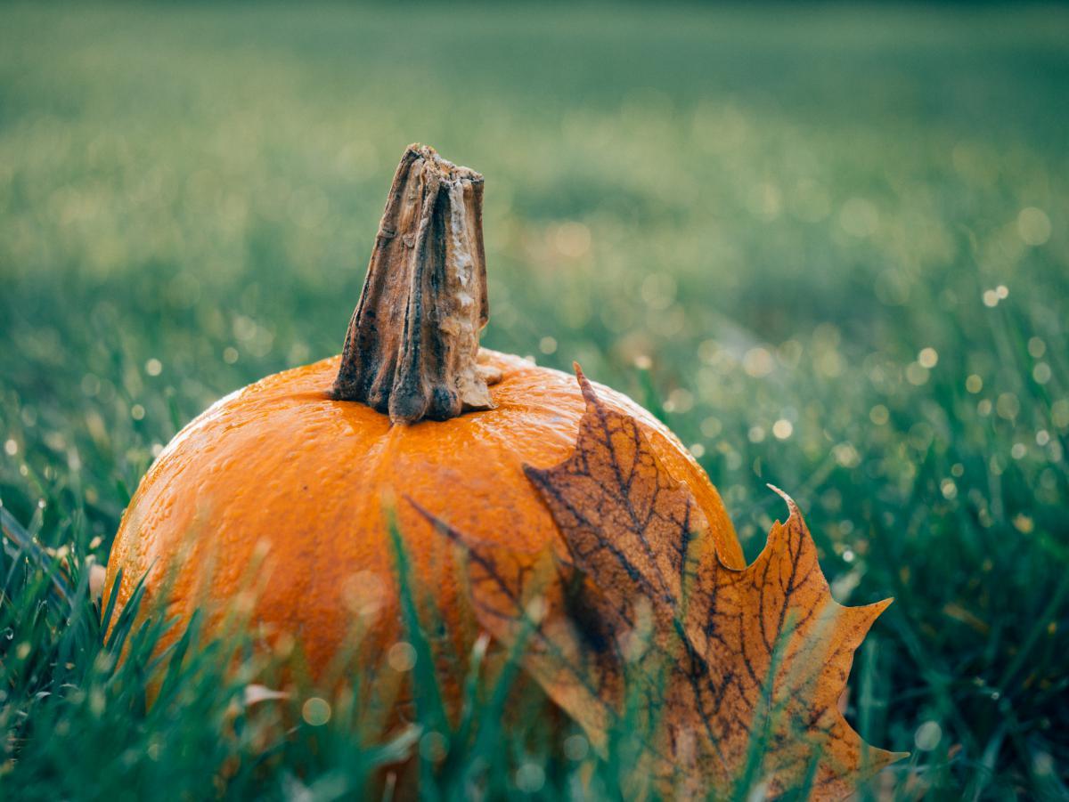 Pumpkin Squash Vegetable #10647