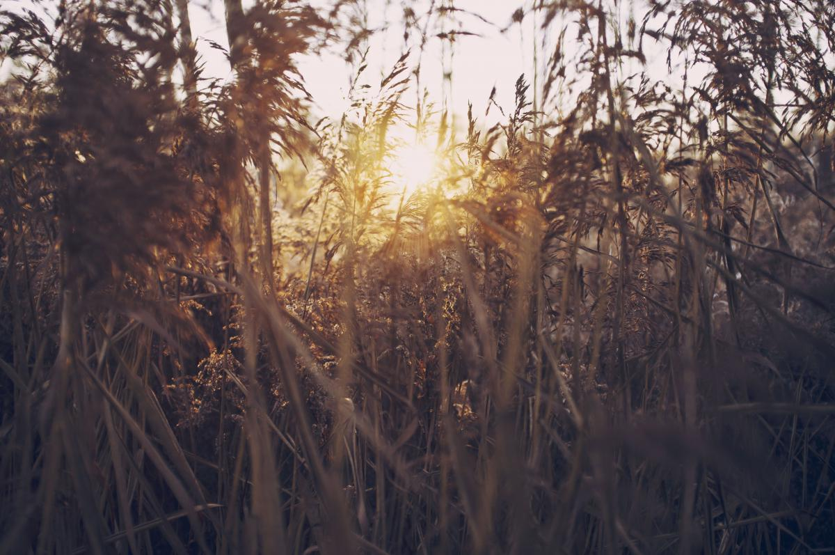 Tree Landscape Grass #10775
