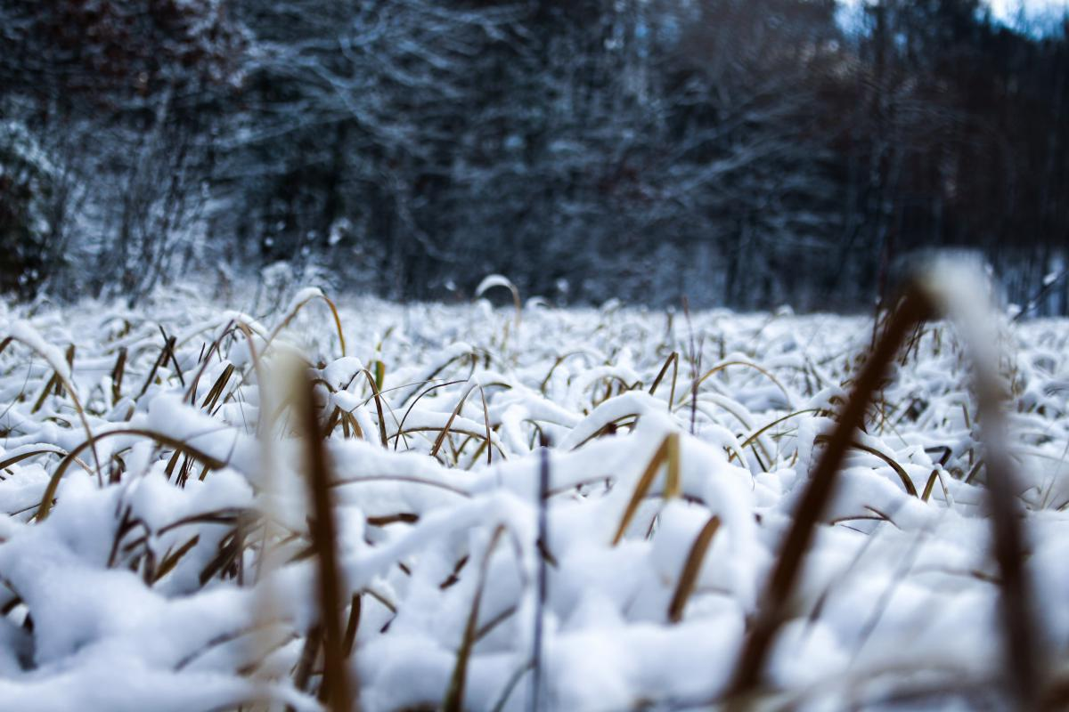 Snow Winter Cold #10797