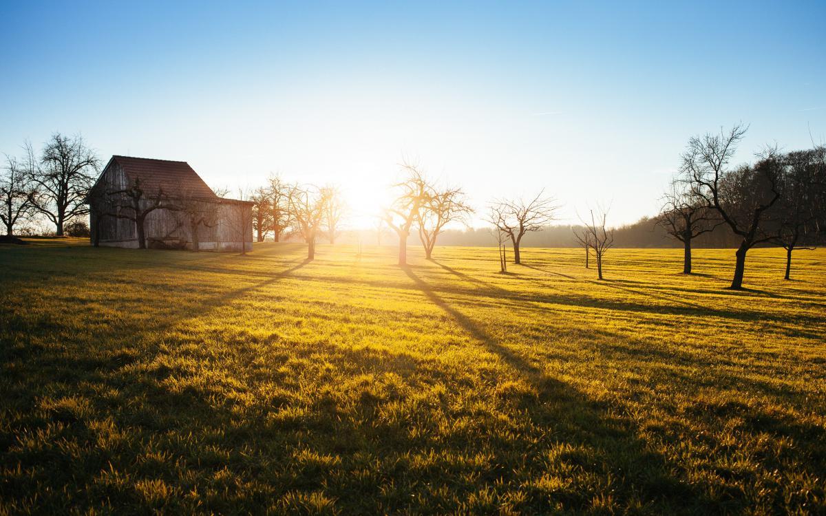 Field Landscape Rural #10811