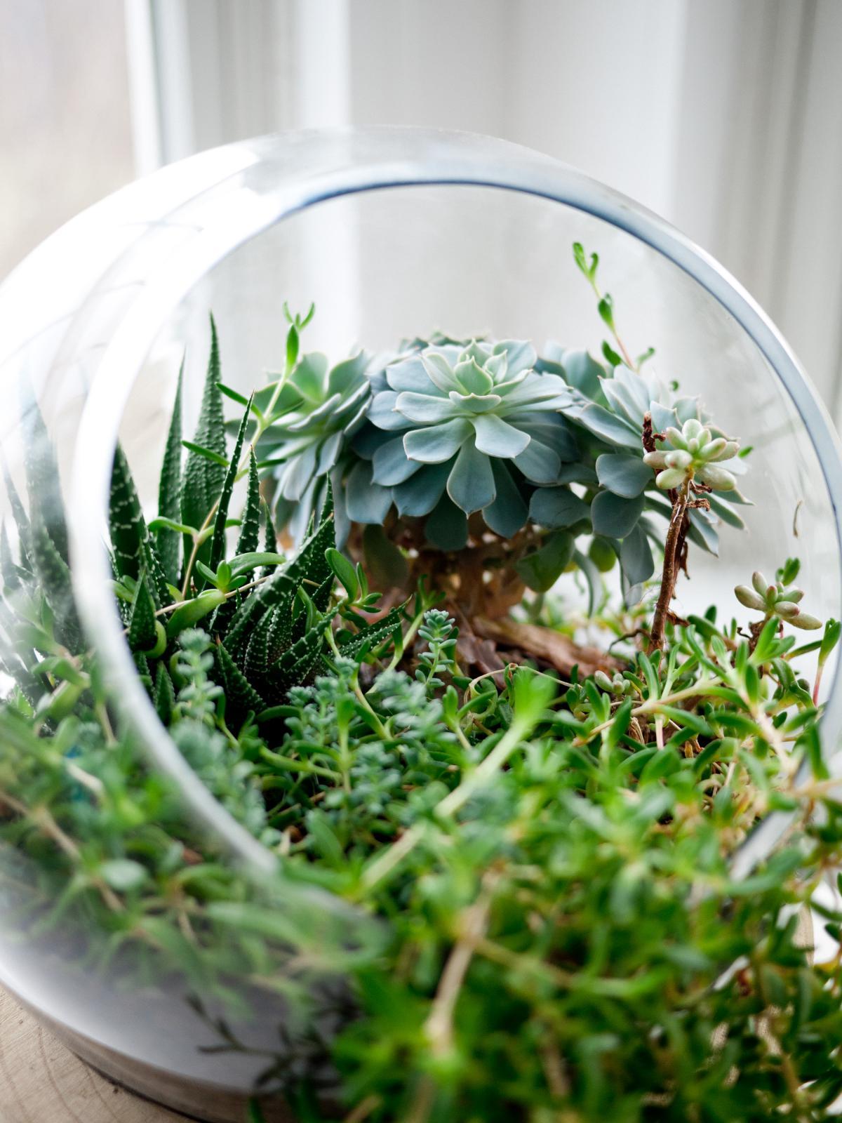 Plant Herb Pot #10832