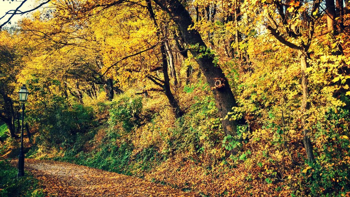 Tree Landscape Oak #108576