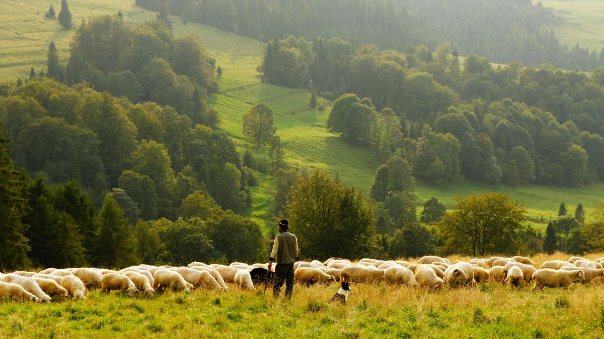 Grassland Grass Landscape #10859