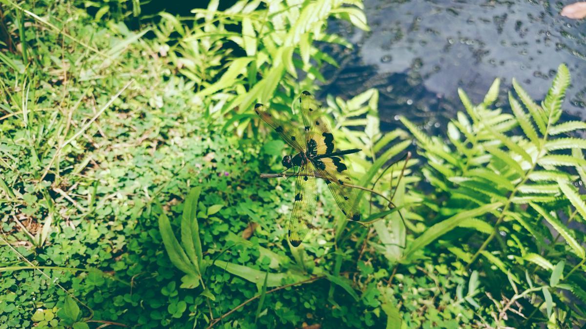Plant Leaf Spring #11016