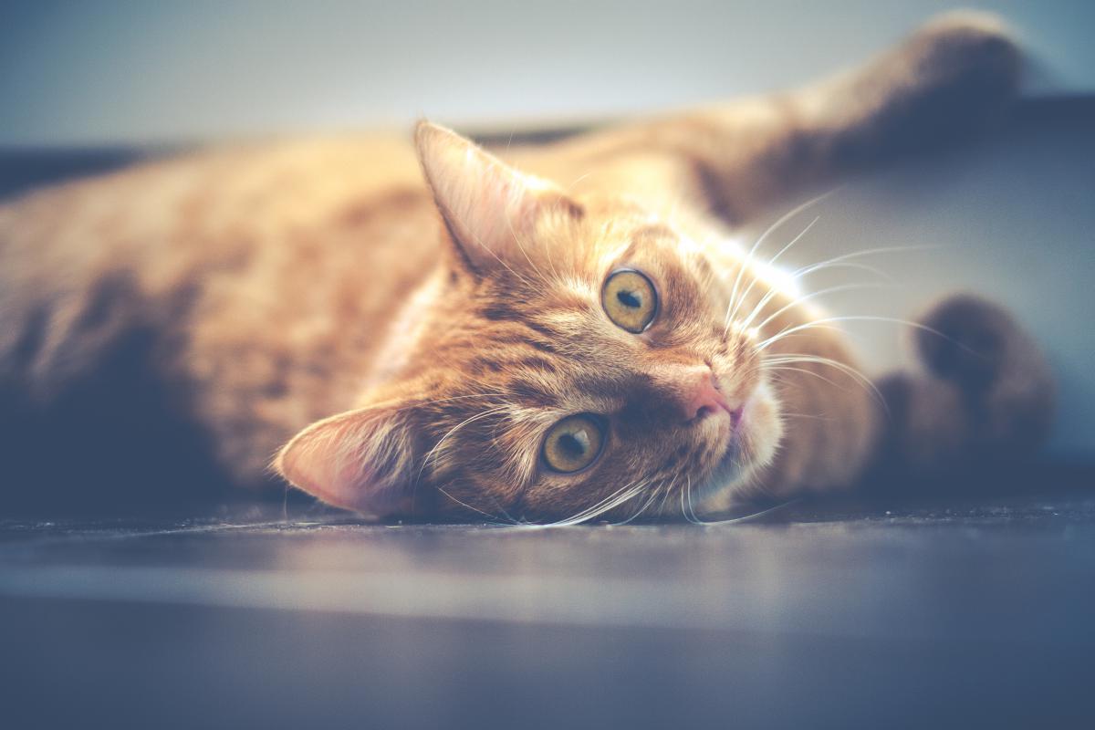 Cat Animal Feline #11039