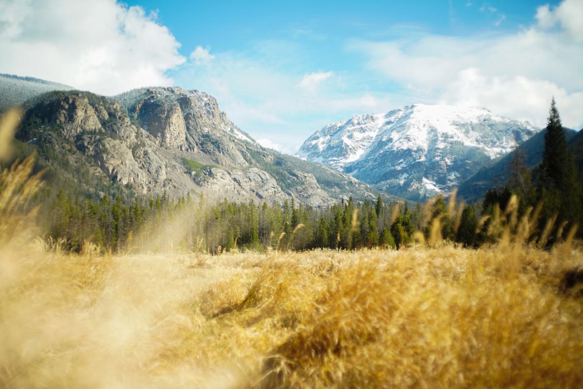 Landscape Grass Sky #11107