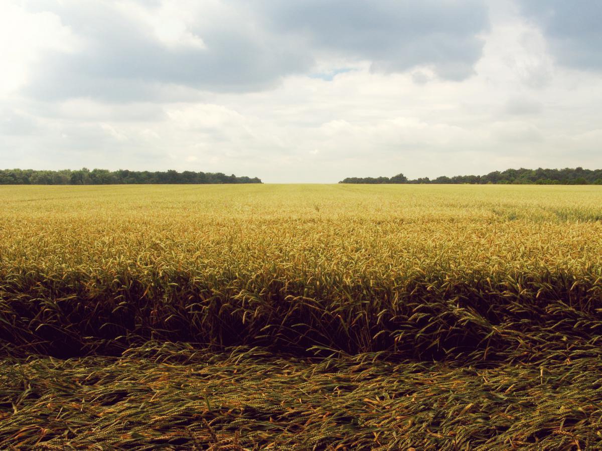 Field Land Landscape #11465