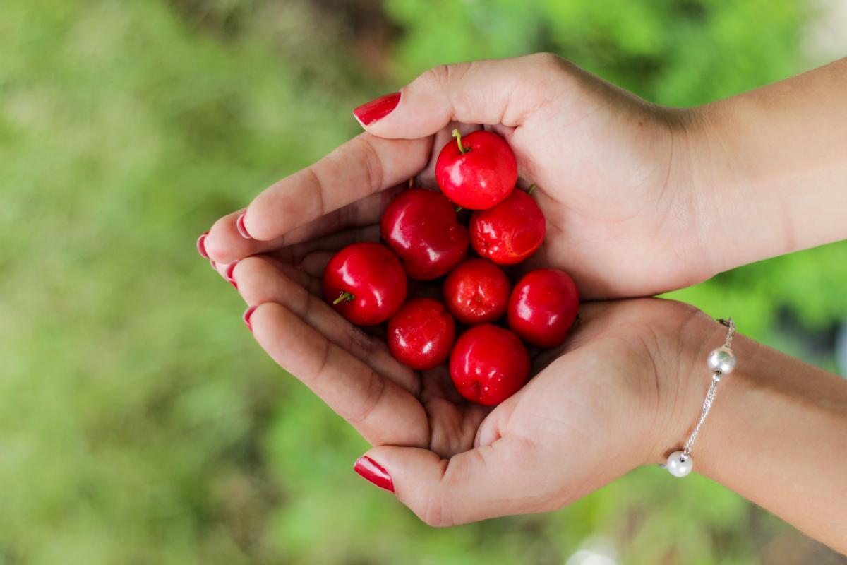 Berry Fruit Grape #11528