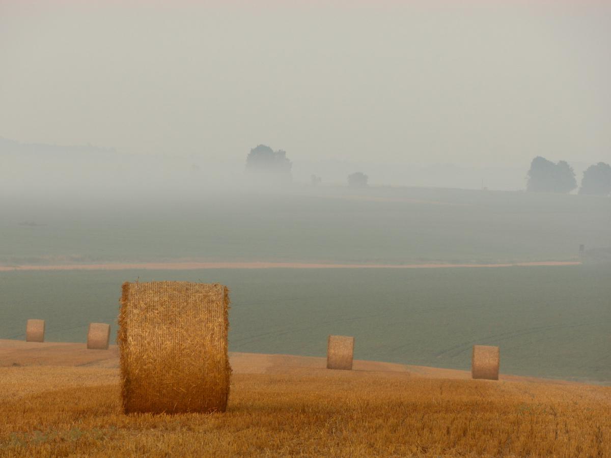 Hay Fodder Feed #11567