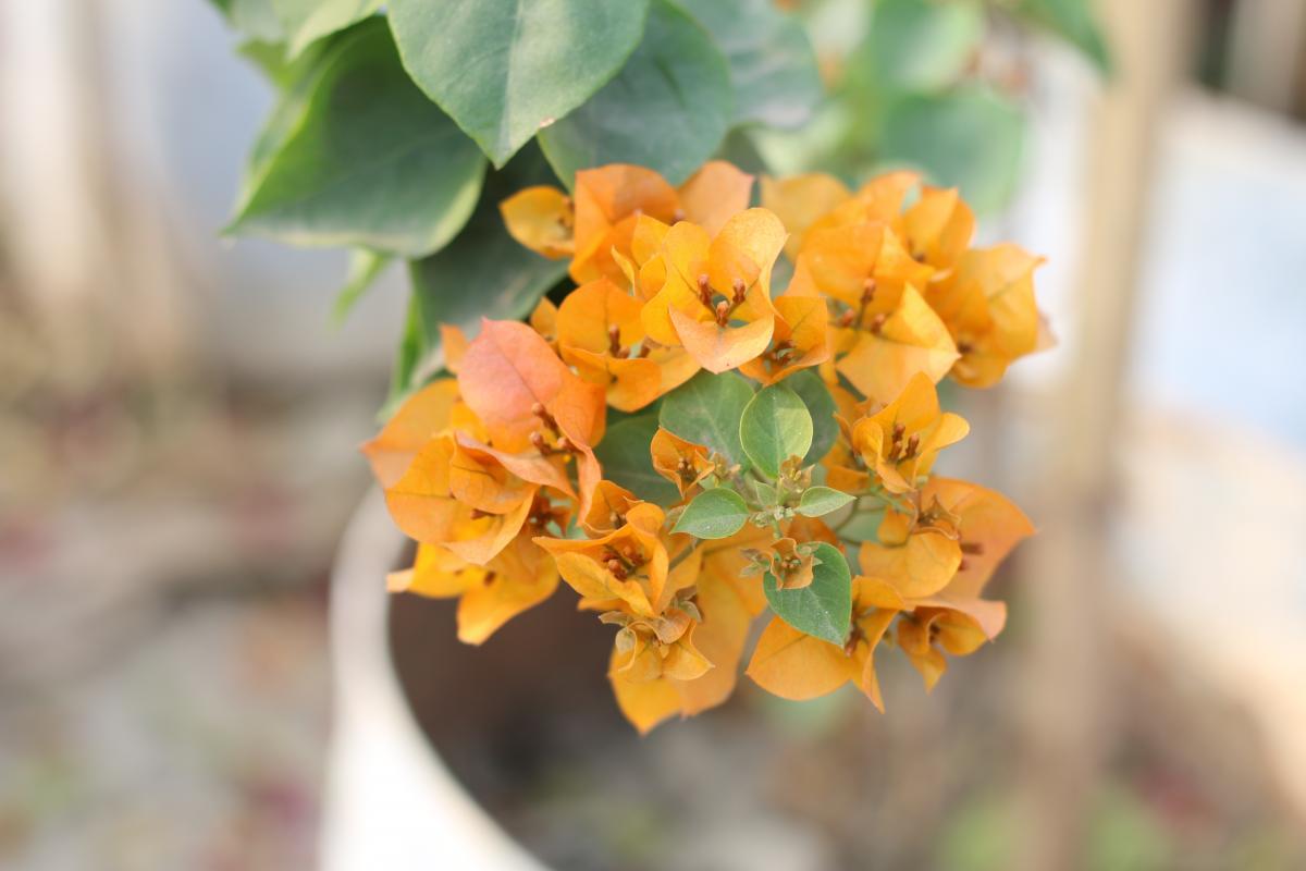 Flower Plant Flora #118432