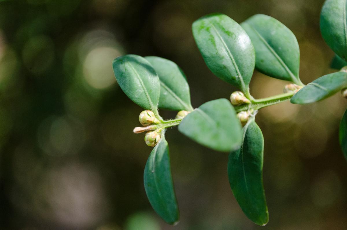 Plant Leaf Green #118774