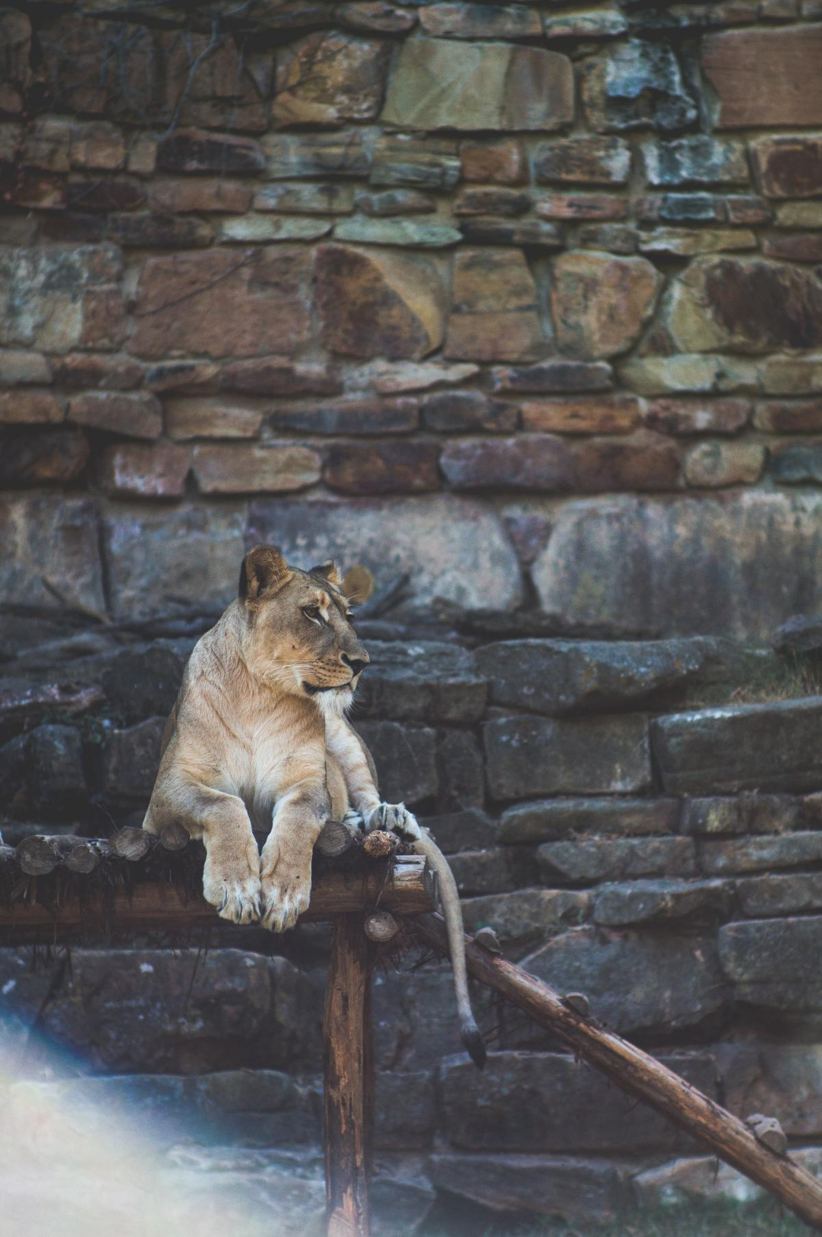Canine Feline Cat #11934