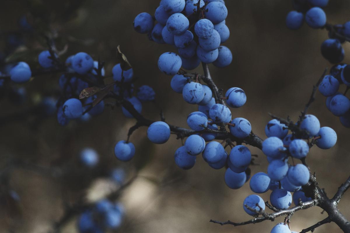 Grape Fruit Grapes #11982