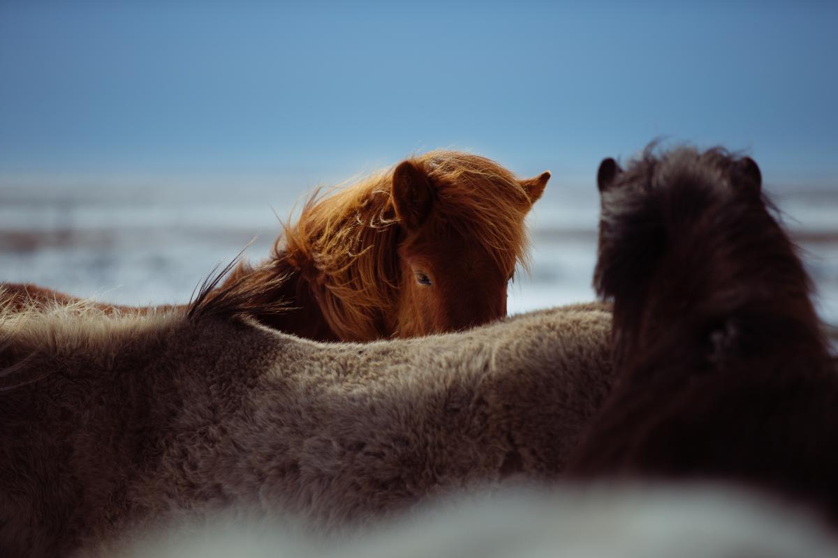 Brown Animal Dog #12019