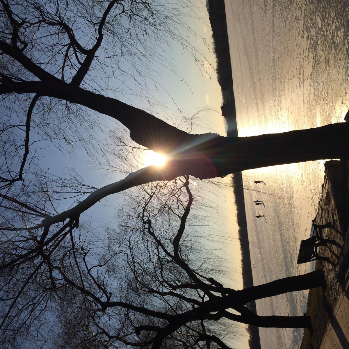 Lighting Tree Apparatus #120310