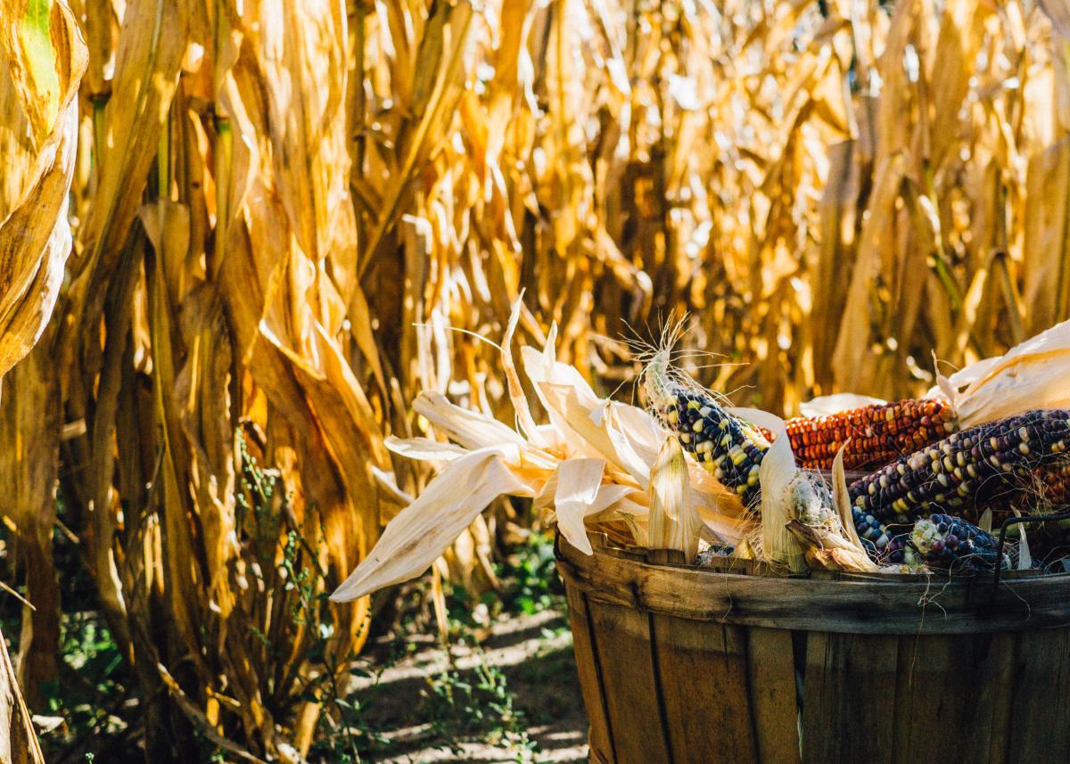 Wheat Grain Cereal #12047