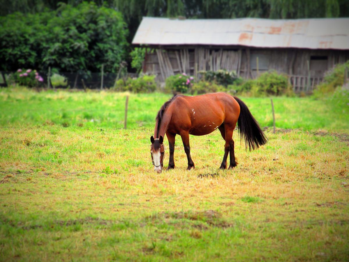 Horse Horses Farm