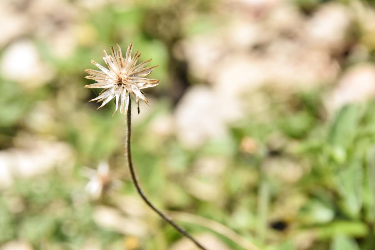 Leaf Plant Herb