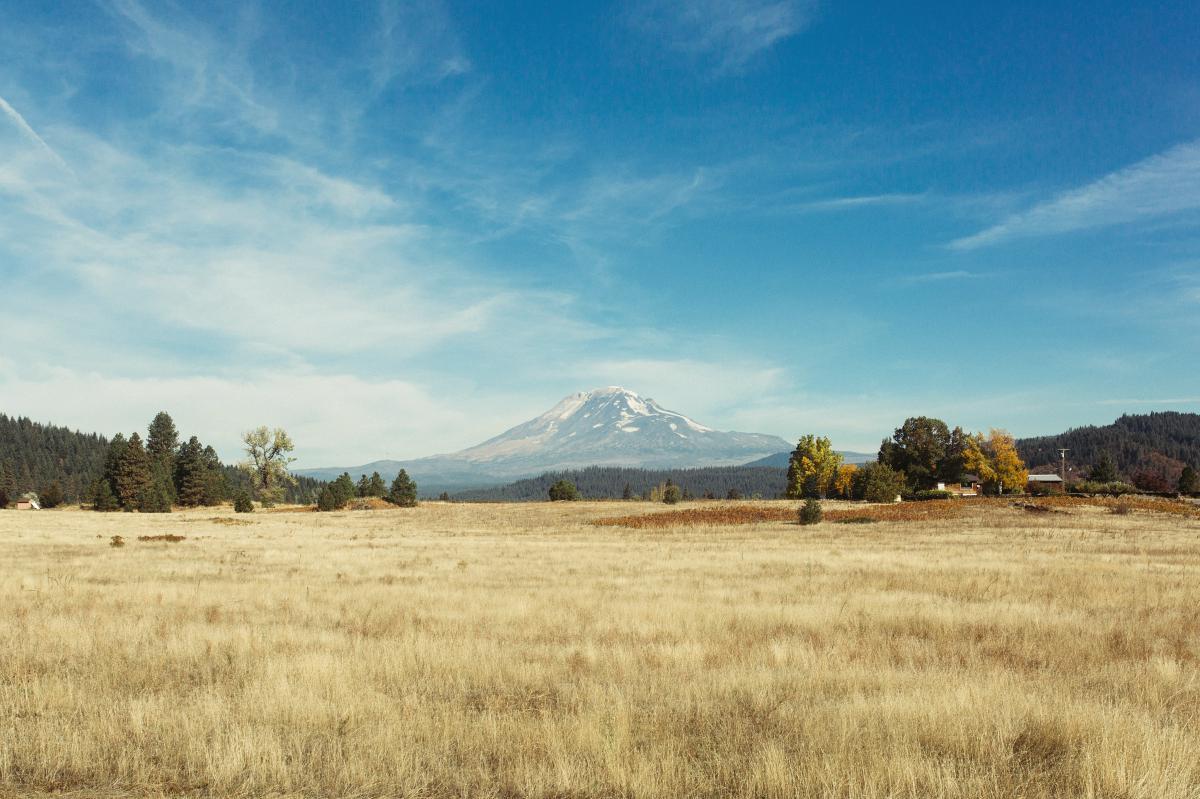 Field Wheat Landscape #12549