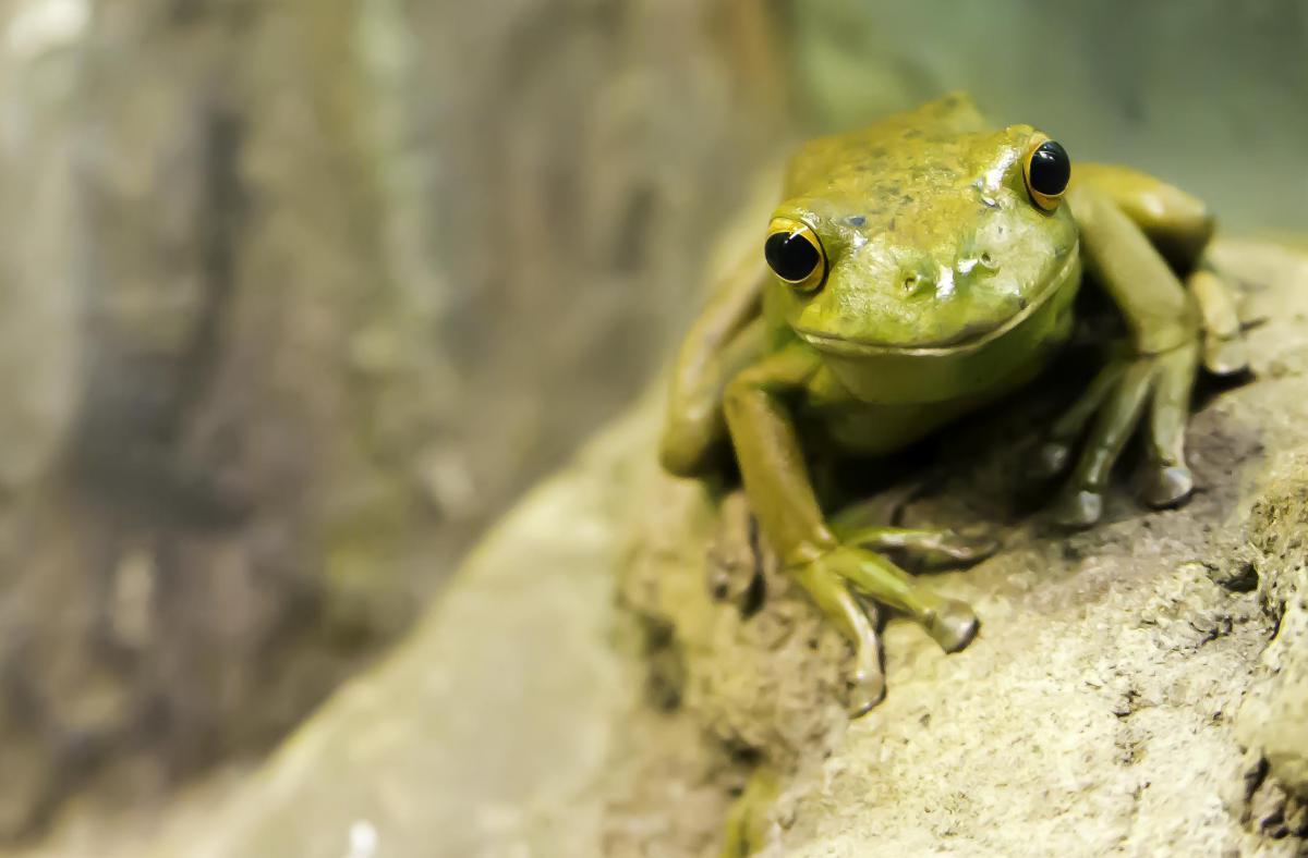 Tree frog Amphibian Frog #12802
