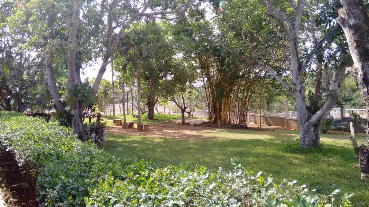 Garden Tree Landscape #128461