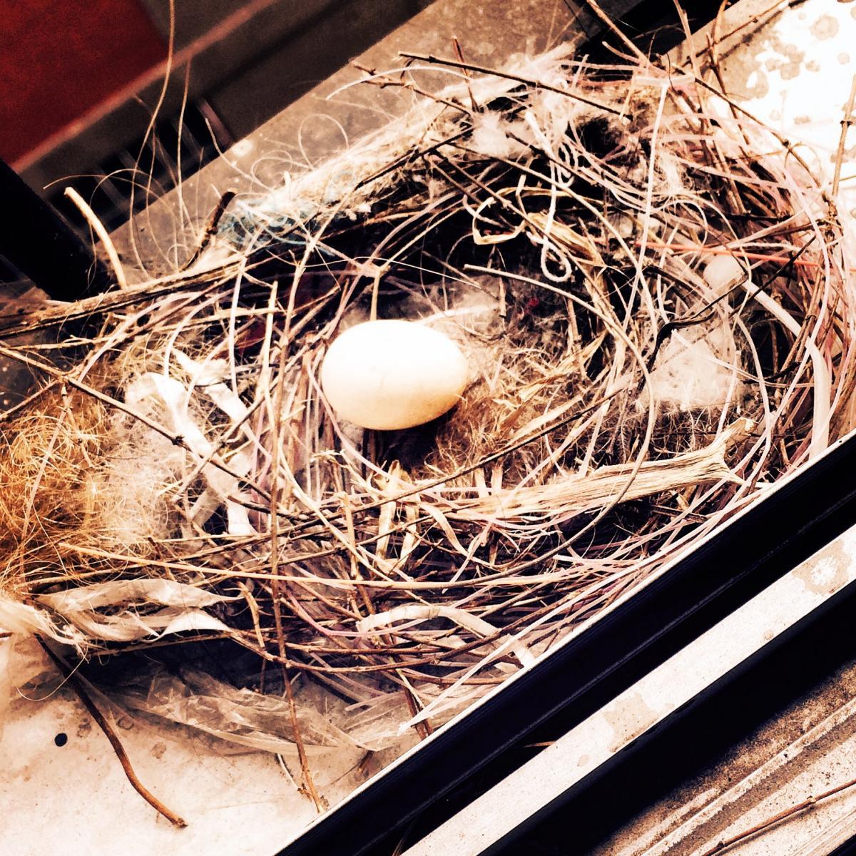 Nest-egg Device Egg