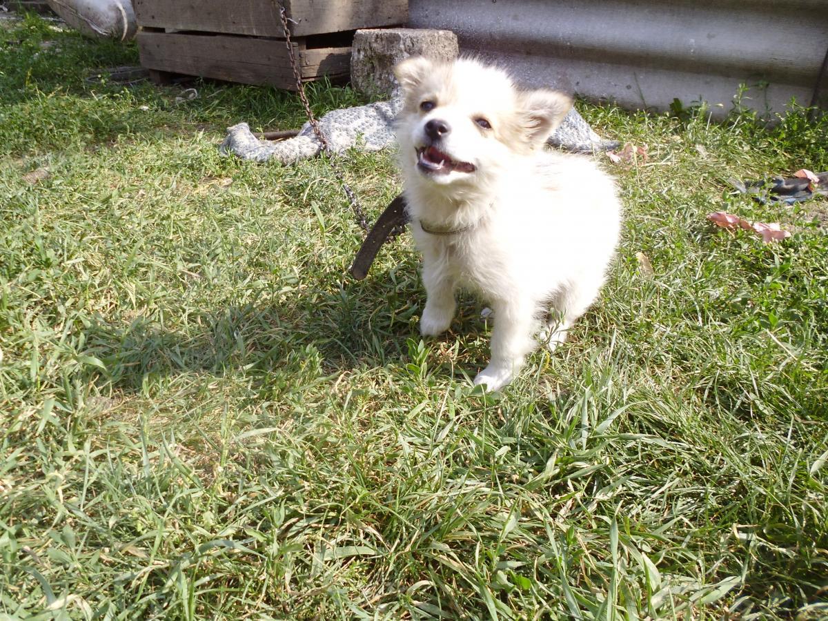 Dog Canine Toy dog