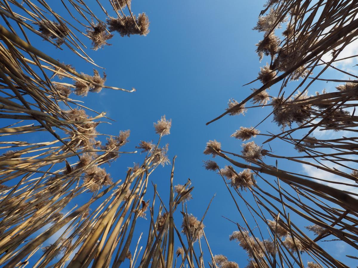Wheat Grass Field