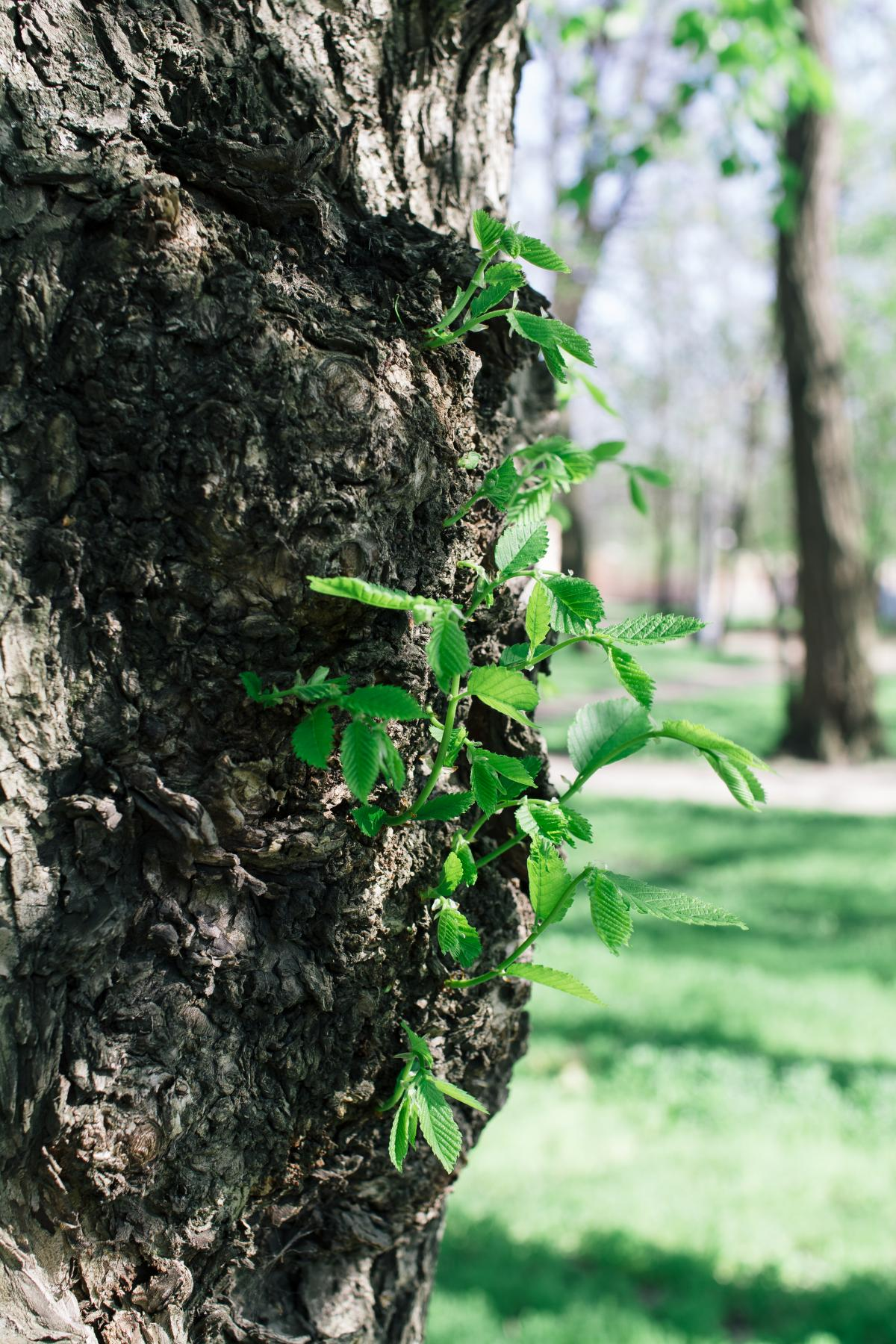 Tree Woody plant Vascular plant #135895