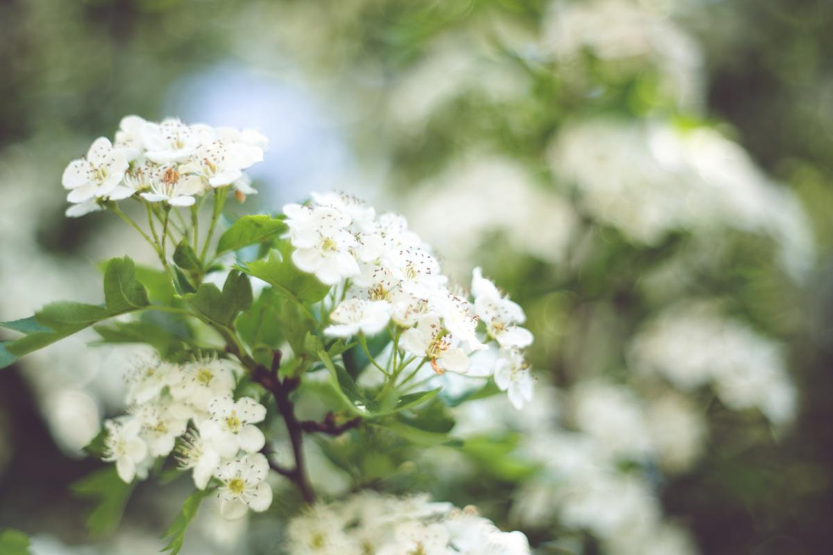 Lilac Flower Floral #13613