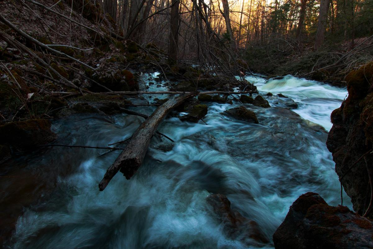 Water River Forest