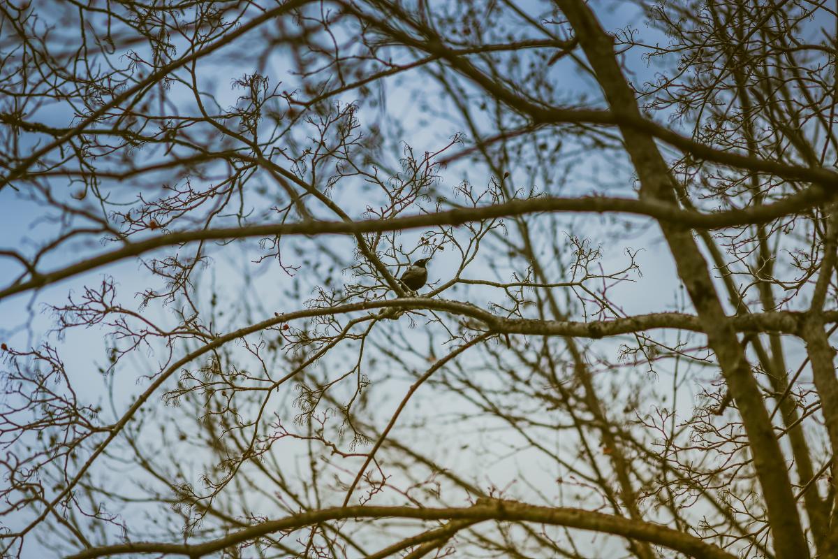 Branch Branchlet Plant #137184