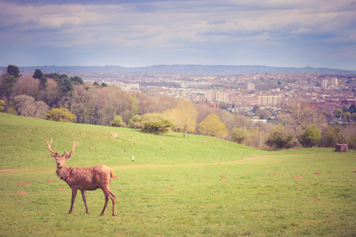 Grass Landscape Horse