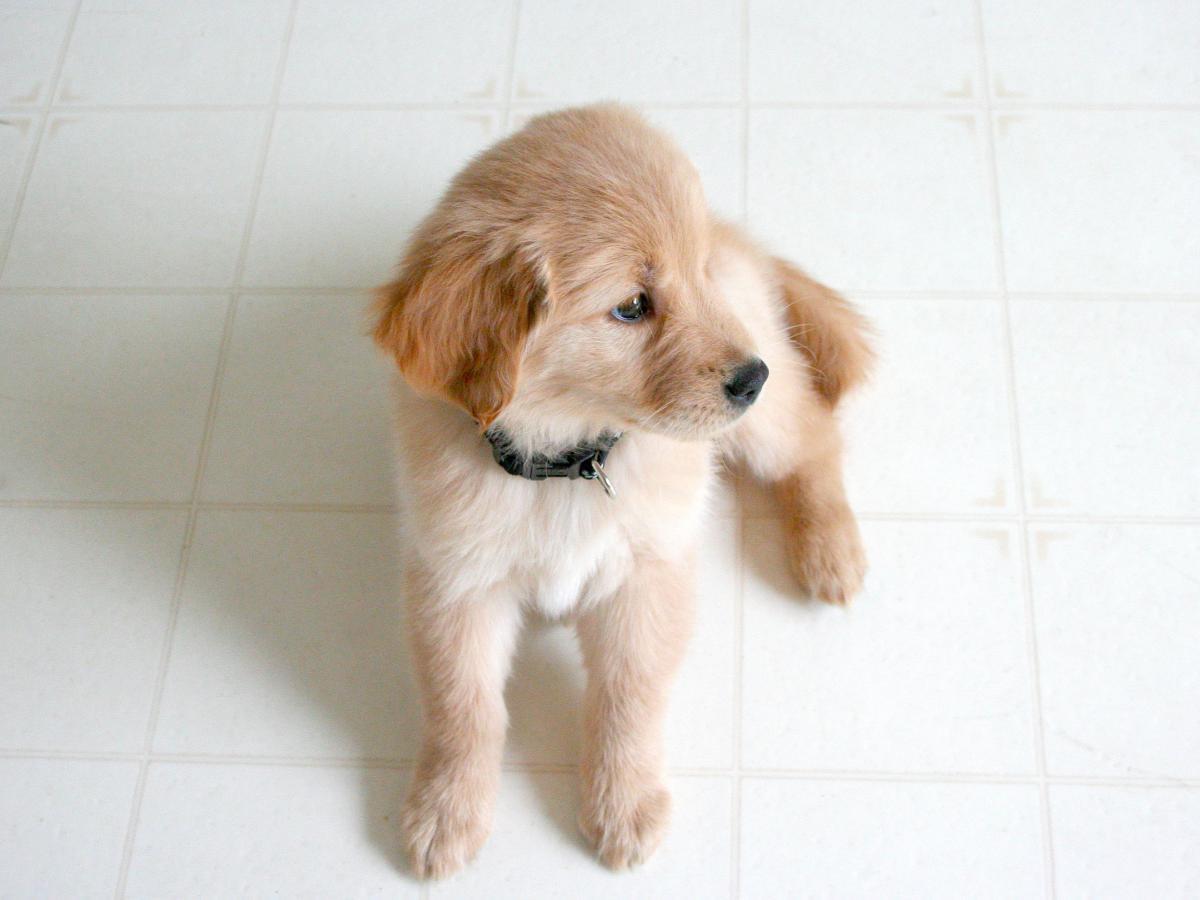 Dog Cocker spaniel Sporting dog #13792