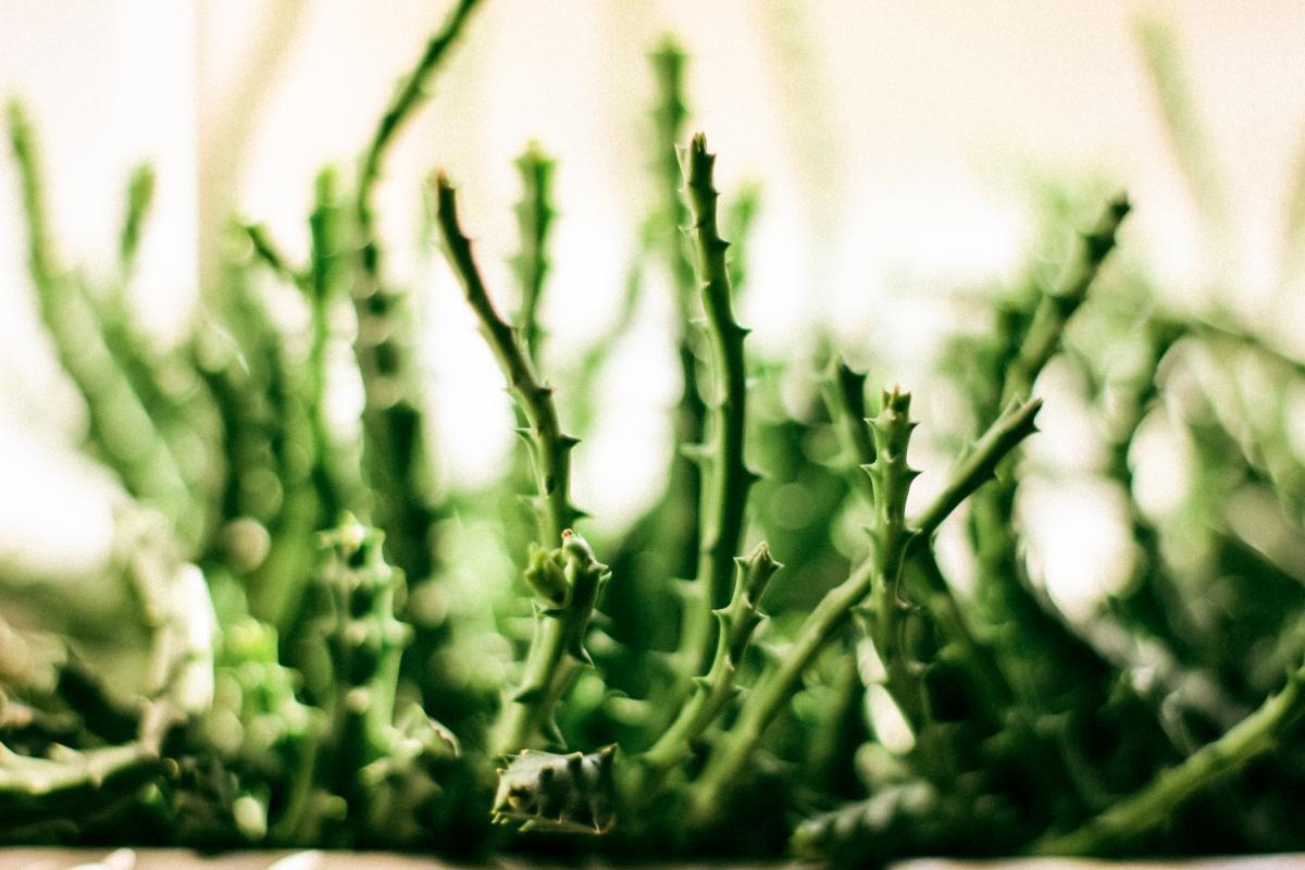 Plant Leaf Herb #138080