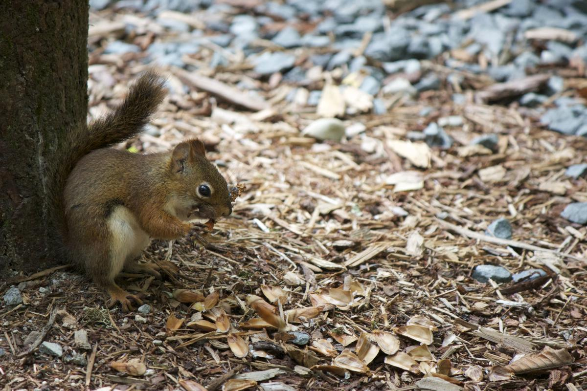 Rodent Squirrel Mammal #13825